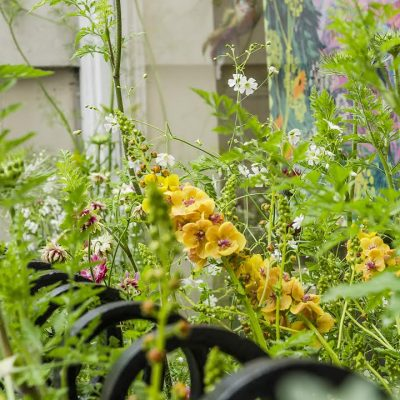 Chelsea in Bloom | Alicia Savage | Garden Design