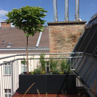 Vienna Rooftop Daytime