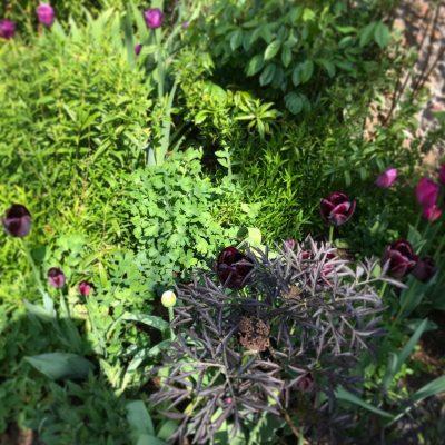 Alicia Savage Gardens - Planting Texture