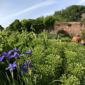 Water Feature Garden