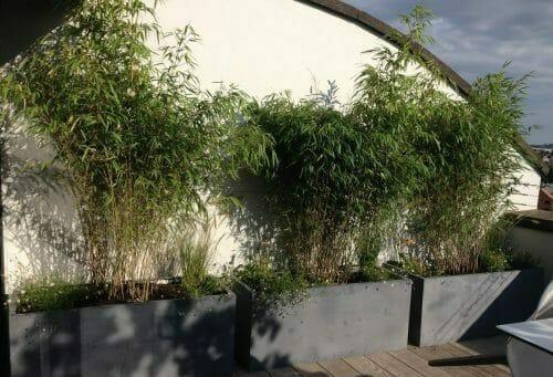 Bristol Roof Garden Bamboo