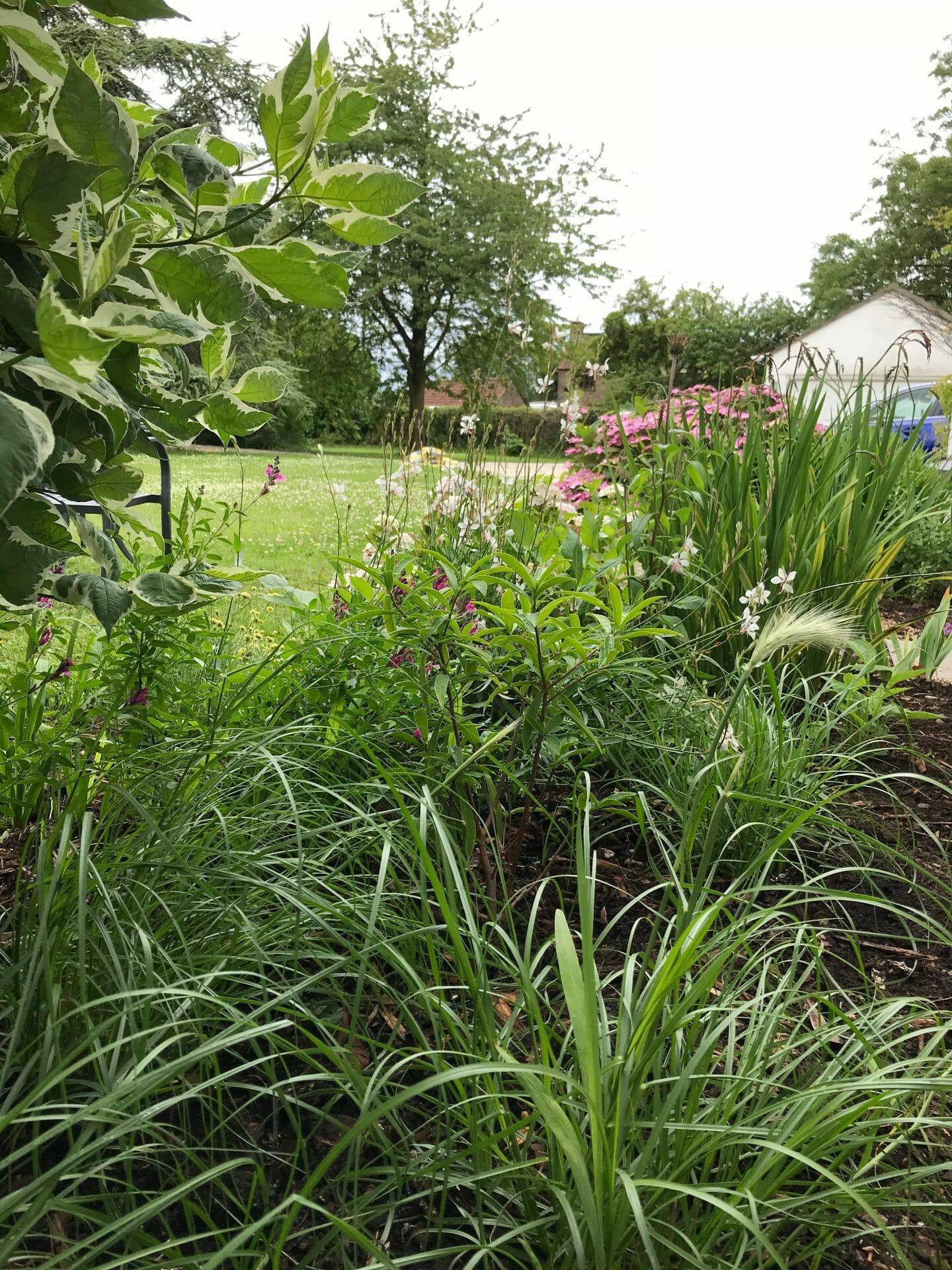 Cottage Garden Planting Grasses
