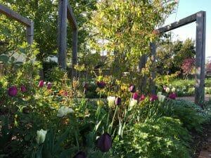 Country Garden Spring Tulips