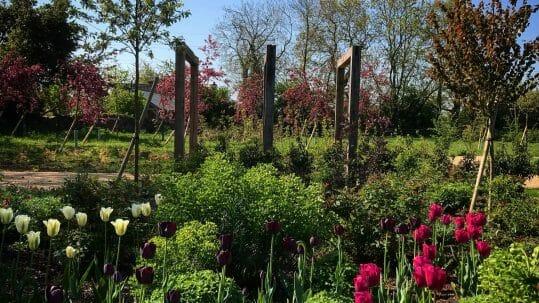 Garden Design Bristol   Alicia Savage Garden Design