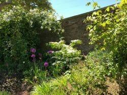 Formal Garden Summer Rose