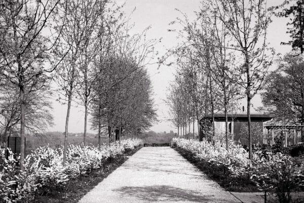 Award Winning Garden Designer